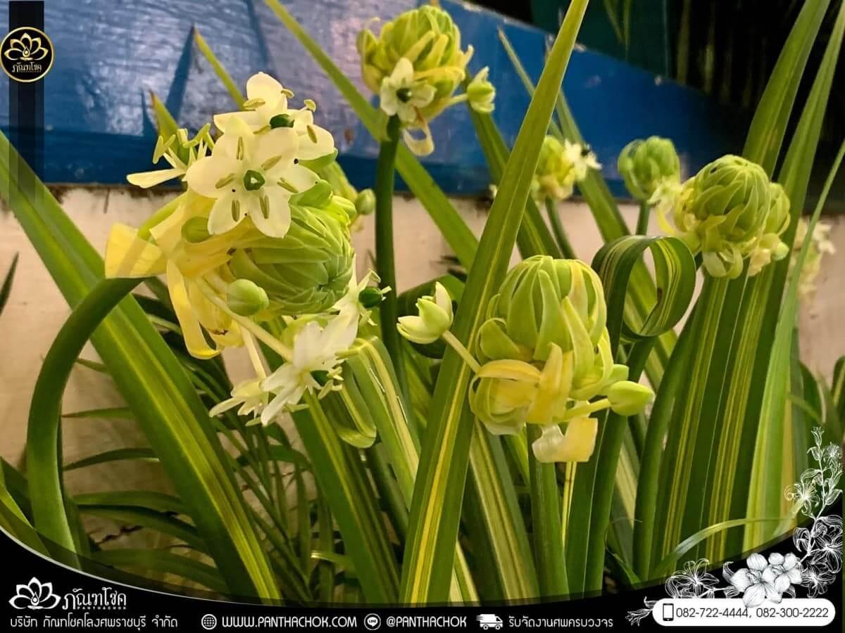 ดอกไม้หน้าหีบโทนสีม่วง-ขาว วัดแจ้งเจริญ อ.วัดเพลง จ.ราชบุรี 17