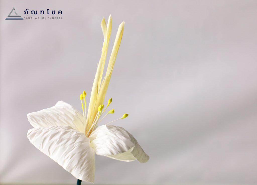 ดอกไม้จันทน์ทั้ง 7 แบบ พร้อมความหมายอันลึกซึ้งที่แฝงอยู่ 7
