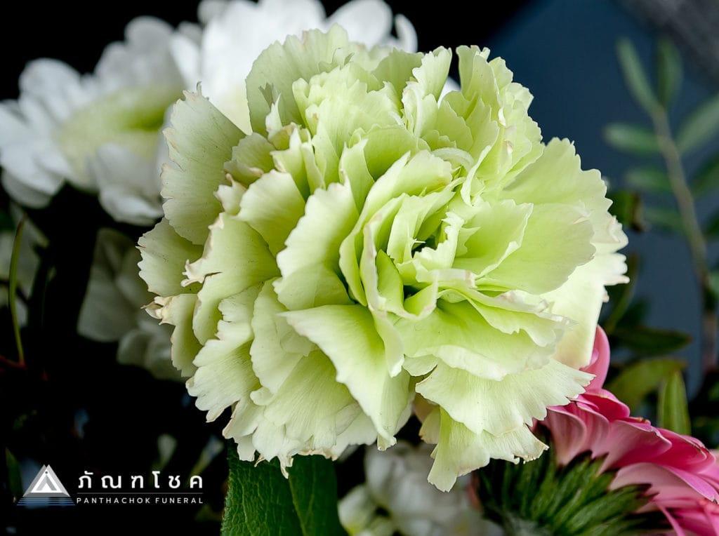 ดอกคาร์เนชั่น ดอกไม้แห่งพระเจ้าและสัญลักษณ์แห่งความตาย 2