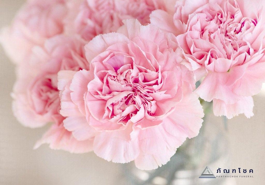 ดอกคาร์เนชั่น ดอกไม้แห่งพระเจ้าและสัญลักษณ์แห่งความตาย 3