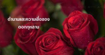 ดอกกุหลาบตัวแทนความรัก 10
