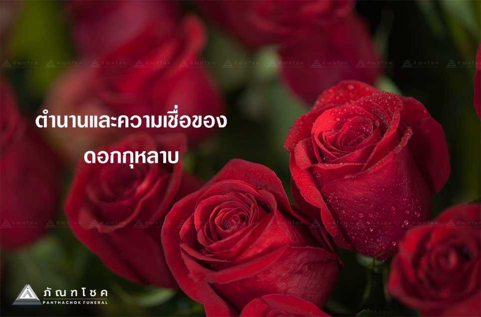 ดอกกุหลาบตัวแทนความรัก 1