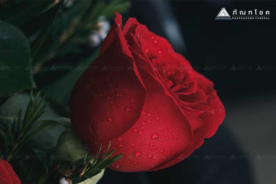ดอกกุหลาบตัวแทนความรัก 2