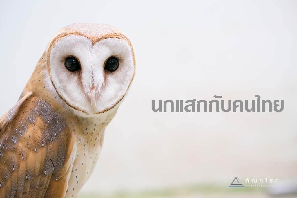 นกแสกกับคนไทย 1