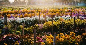 การเลือกใช้โทนสีดอกไม้สด เพื่อประดับตกแต่งหน้าหีบ