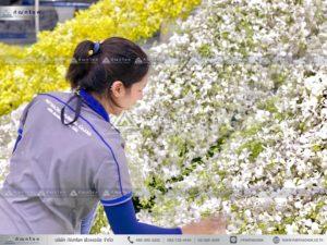 นกยูงงานศพ วัดไทร นครปฐม นกยูงหน้าศพสวยหรู จัดงานศพเรียบง่ายยิ่งใหญ่ ดอกไม้หน้าศพสวยๆ