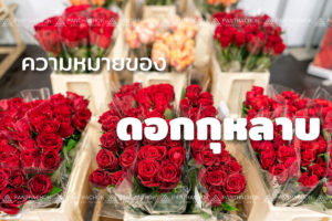ความหมายของดอกกุหลาบ